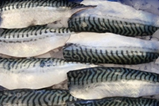 Hand Cut Mackerel Fillets